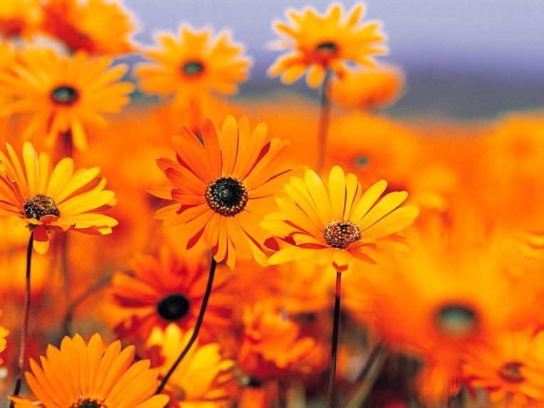 orange-blur[1]